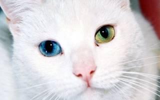 Как видят кошки: различают ли цвета, хорошо ли ориентируются в темноте и другие аспекты