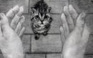 Корм для кошек Natures Table — обзор состава и отзывы
