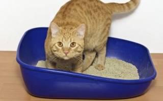 Слабительное для кошек и котов: медикаментозные препараты и народные средства для взрослых животных и котят, отзывы