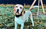 Сторожевые породы собак для охраны частного дома и квартиры — фото и описание, советы по выбору