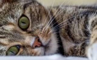 Как определить пол котенка. 5 эффективных методов с фото как отличить кота от кошки