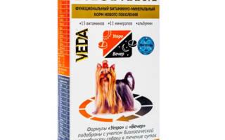 Витамины Биоритм для кошек: 4 популярных вида, отзывы