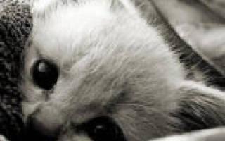 Кошачий грипп: симптомы, лечение и профилактика