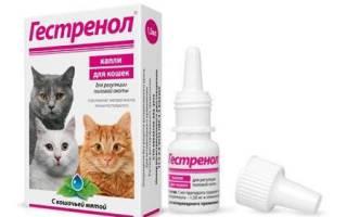 Гестренол для кошек и котов: инструкция по применению средства в форме капель и таблеток, отзывы, аналоги