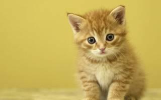 390 имен для перса кота и кошки (по полу, окрасу, оригинально)