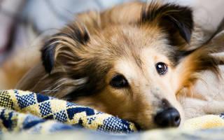 Как бороться с шерстью животных (кошек, собак) в квартире