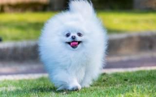 Пушистые собаки — названия пород, фото, описание