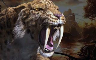 Саблезубые кошки: характер и внешность вымершего вида, образ жизни и ареал обитания, причины исчезновения