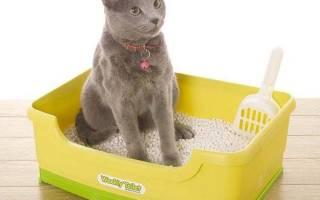 Как воспитать котенка: 10 советов + видео от заводчиков