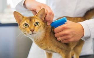 Вся правда о чипировании кошек: как и зачем делают