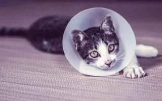 Форвет для кошек: инструкция по применению, аналоги, отзывы