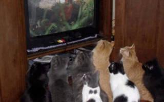 11 Лучших видео для кошек (птицы, рыбки, лазер, мышки)