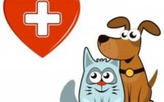 Эпилепсия у кошек: причины, лечение, как прекратить приступы