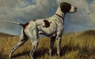 Вымершие породы собак: каких псов больше не существует