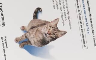 Стронгхолд для кошек: инструкция по применению капель на основе селамектина для взрослых животных и котят, отзывы, аналоги