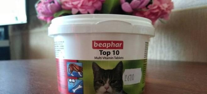 Витамины Beaphar для кошек: 5 популярных видов, отзывы