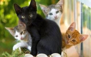 К чему снятся маленькие котята и кошки — толкование по соннику