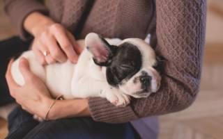 Сколько лет живут собаки разных пород в домашних условиях и на улице — продолжительность жизни