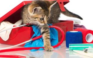 Ренал Эдвансед для кошек: инструкция по применению, отзывы и аналоги препарата