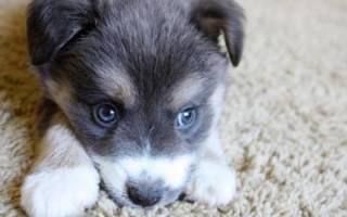 Собака дворняга — описание и характер породы, фото