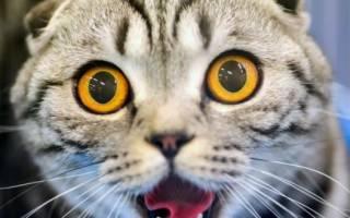 Почему у кота или кошки текут слюни изо рта: причины и лечение животного