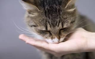 Чем кормить кошку для набора веса: 6 лучших калорийных корма