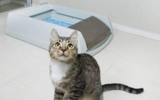 «Фреш Степ» — наполнитель для кошачьего туалета: особенности, состав и отзывы Fresh Step