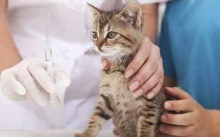 Вакцинация кошек: в каком возрасте делают прививки котятам, график инъекций в виде таблицы, обзор вакцин