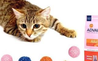 «Эдванс» (Advance): состав корма для кошек, его виды, плюсы и минусы, отзывы о нем ветеринаров и владельцев животных