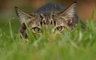 17 фактов которые нужно знать о кошках
