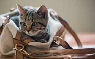 Что купить котенку в первую очередь