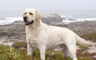 Средние породы собак с фотографиями и названиями