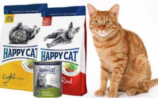 Корм для кошек Happy Cat («Хэппи Кэт»): отзывы ветеринаров и владельцев животных, состав и ассортимент, преимущества и недостатки