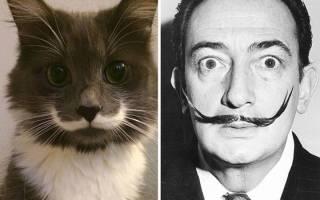 Смешные кошки и коты: 32 фото и 3 видео до слез