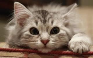 Необычные клички для кошек и котов. Как необычно назвать котенка