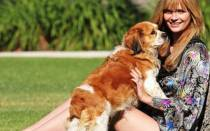 Собаки-компаньоны — лучшие породы для квартиры и уличного содержания с фото и названиями