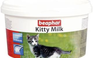 Заменители кошачьего молока: ТОП 5 товаров [рейтинг, цены, отзывы]