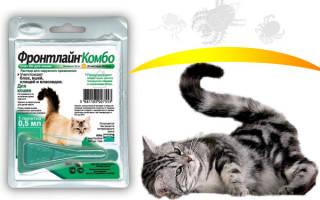 Фронтлайн для кошек: отзывы, инструкция по применению, противопоказания