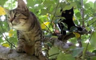Полосатые породы кошек [фото + список пород]