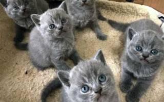Как выбрать котенка: 5 обязательных вопросов к продавцу