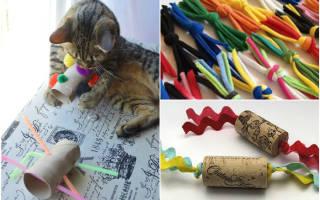 Игрушки для котят своими руками в домашних условиях, как сделать интересную для кошки игрушку — интерактивную, дразнилку, погремушку