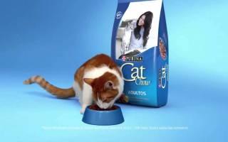 Корм для кошек Кэт Чау (Cat Chow) — отзывы и советы ветеринаров, цена