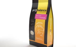 Корм для кошек ProBalance (Пробаланс) — отзывы, состав и советы ветеринаров