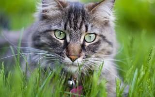 8 продуктов вызывающие метеоризм у кошек (кот пукает)