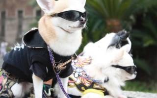 Японские породы собак с фотографиями, названием и описанием