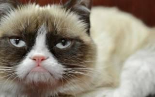 Знаменитые коты: имена и фото самых известных представителей кошачьих