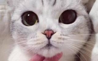 Японские имена для кошек и котов и их значения