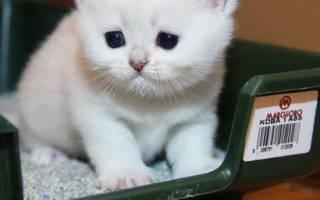 Кот или кошка не могут сходить в туалет по-маленькому: причины, что делать, как помочь котенку и взрослому питомцу в домашних условиях