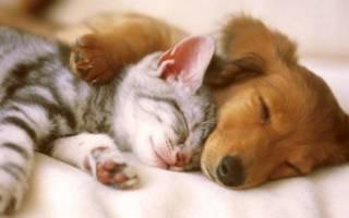 Собаки или кошки — кто лучше, их достоинства и недостатки, кого стоит завести