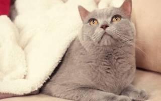 Кламоксил для кошек: инструкция по применению, состав, аналоги, отзывы